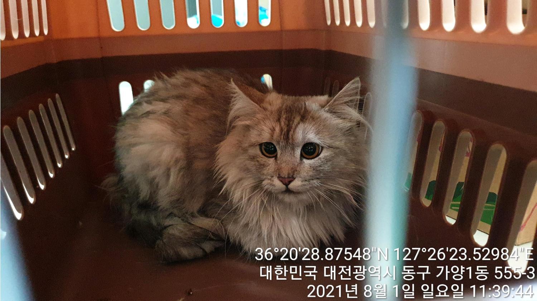 대전 동구 가양동 아침마을아파트에서 페르시안 고양이 발견 보호
